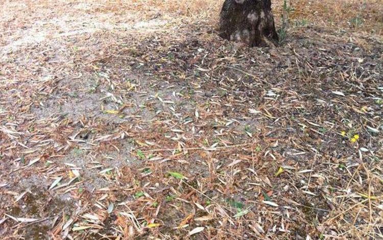 Agroseguro indemnizaciones pedrisco Andalucía