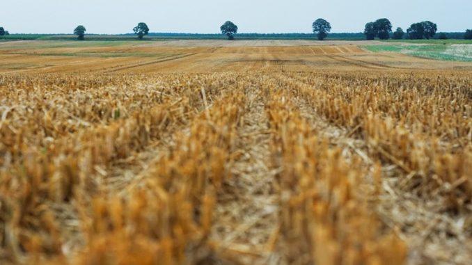 Qué cubren los seguros agrarios